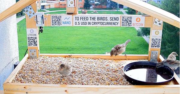 Bird Live Cam